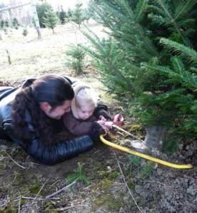 cuttingthetree