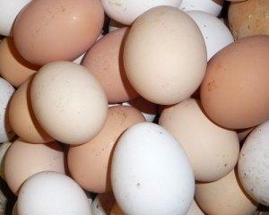 Eggsprewash
