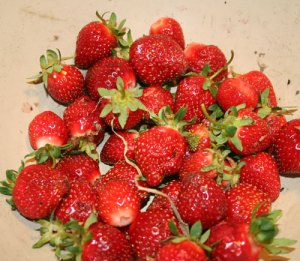 Firststrawberries